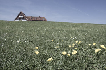 Germany, Lower Saxony, Baltrum, residential house with spring meadow in the foreground - WI000887