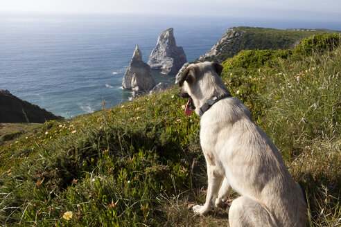 Portugal, Sintra, Praia da Ursa, dog at the coast - FA000017