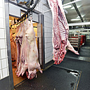 Pig carcasses in a slaughterhouse - LYF000189