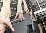 Pig carcasses in a slaughterhouse - LYF000190