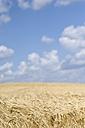 Barley field, Hordeum vulgare, in front of cloudy sky - ELF001182
