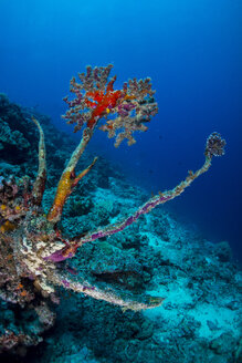Oceania, Palau, leftover of dead coral with new life on top - JWAF000167