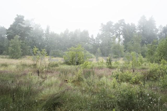 Germany, Baden Wuerttemberg, Schwarzwald-Baar-District, Schwenninger Moos Nature Reserve, Fog - ELF001203