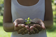Germany, Human hands holding seedling - CRF002609
