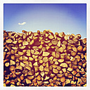Belgium, Province Luxembourg, The Ardennes, Firewood - GWF003017