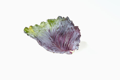 Leaf of red cabbage, Brassica oleracea convar. capitata var. rubra L., on white background - CHF000075