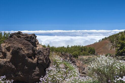 Spain, Canary Islands, Tenerife, Teide National Park - RJF000238