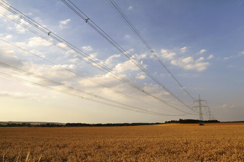 Germany, Saxony, Wheat field and power pole - LYF000223