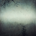 Germany, near Wuppertal, Foggy forest and flying birds, Textured effect - DWI000126