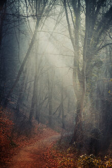 Germany, North Rhine-Westphalia, Solingen, Forest path in autumn, Textured effect - DWI000136