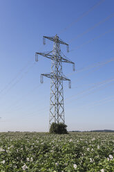 Germany, North Rhine-Westphalia, Pulheim, High voltage power lines and potato field - GWF003098