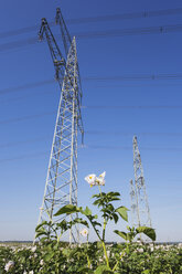 Germany, North Rhine-Westphalia, Pulheim, High voltage power lines and potato field - GWF003100