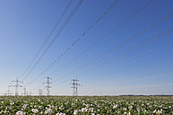 Germany, North Rhine-Westphalia, Pulheim, High voltage power lines and potato field - GWF003101