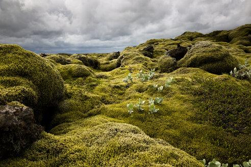 Iceland, Skaftareldahraun, Lava field - FCF000287