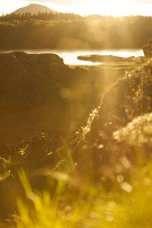 Iceland, Skutustadir, Krafla-volcanic area, Myvatn lake against the sun - FCF000303