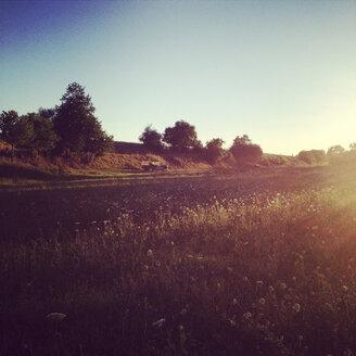 Meadow in evening - LVF001722