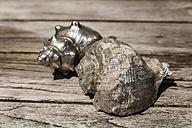 Decorative seashells - TCF004151