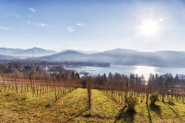 Austria, Carinthia, Klagenfurt, vineyard at Woerthersee - DAWF000088