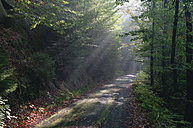 Germany, Saxony, Saxon Switzerland, Kirnitzsch, sunbeams shining on forest track - RUEF001268