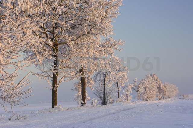 Row of trees with hoar-frost in snow covered landscape - RUEF001275