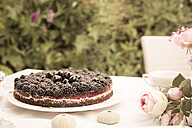 Chocolate berry cake on a garden table - FCF000400