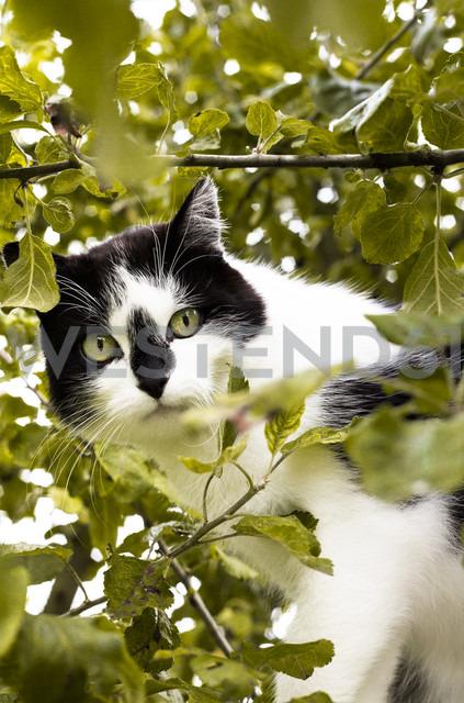 Portrait of cat sitting in a tree - FCF000432