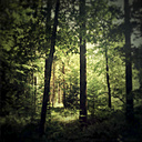 Germany, Baden-Wurttemberg, Tubingen, Forest - LVF001772