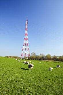 Germany, Schleswig-Holstein, Hetlingen, Electricity pylon and flock of sheep - KRPF000970