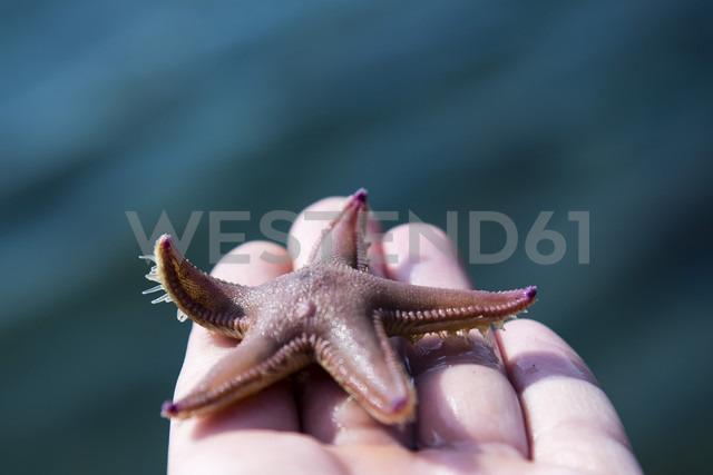 Norway, starfish in hand - NG000195