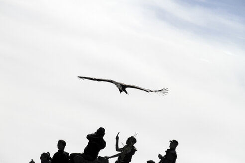 South America, Peru, Andean Condor, Vultur gryphus, flying over some tourists in the Colca Canyon - KRP000803