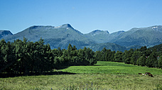 Norway, Larsnes, cows on meadow - NGF000210