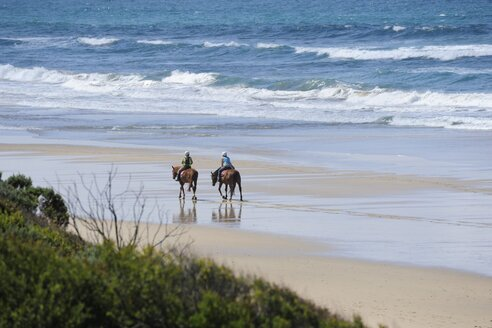 Australia, Victoria, Great Ocean Road, horseback riding on the beach between Torquay and Lorne - MIZ000543