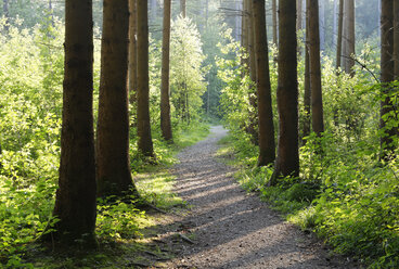 Germany, Bavaria, Prutting, forest path - SIEF005839