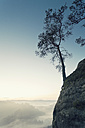 Germany, Saxony, single tree on slope at Elbe Sandstone Mountains - MSF004107