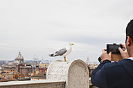 Italy, Rome, tourist taking picture with seagull in foreground - GW003275