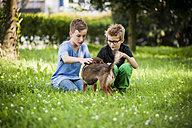 Two boys crouching on a meadow  with their dog - PAF000887