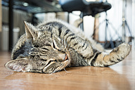 Portrait of European Shorthair sleeping on the floor - CSTF000402