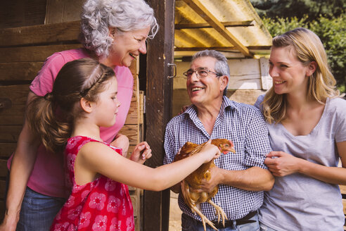 Germany, Northrhine Westphalia, Bornheim, Girl petting chocken with grand parents - MFF001167