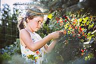 Germany, Northrhine Westphalia, Bornheim, Girl inspecting currant bushes - MFF001211