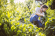 Germany, Northrhine Westphalia, Bornheim, Mid adult man working in vegetable garden - MFF001223