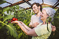 Germany, Northrhine Westphalia, Bornheim, Man and woman admiring ripe tomatoes in greenhouse - MFF001226