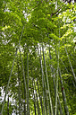 Japan, Kyoto, bamboo forest - HLF000723