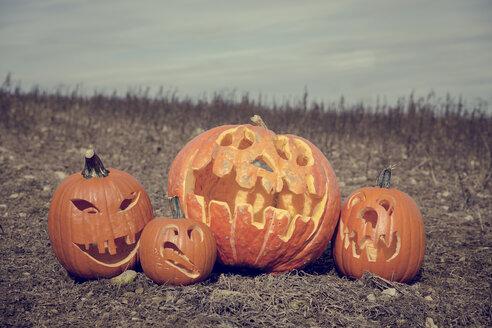 Germany, Baden-Wuerttemberg, Halloween, pumpkins on field - MIDF000005