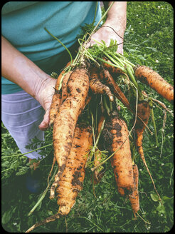 Woman holding bunch of carrots - SHIF000069