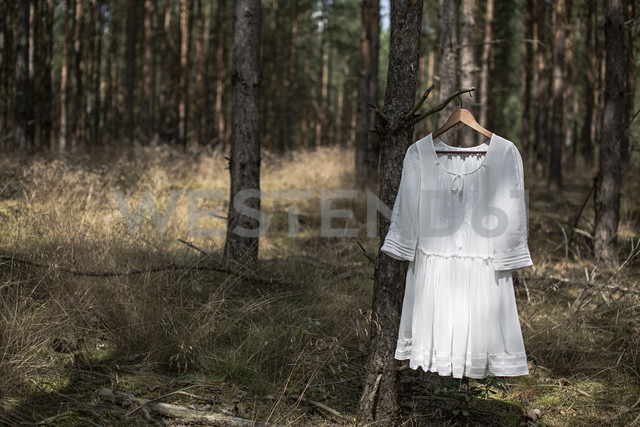 White dress on a hanging on a tree limb in a forest - ASCF000001