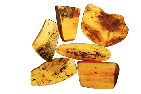 Polished amber pieces with fossils in front of white background - JAWF000040