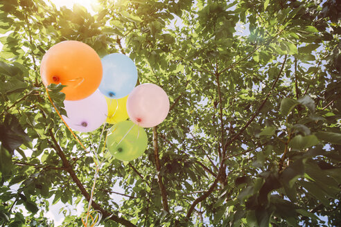 Helium ballons hanging in trees - MFF001235