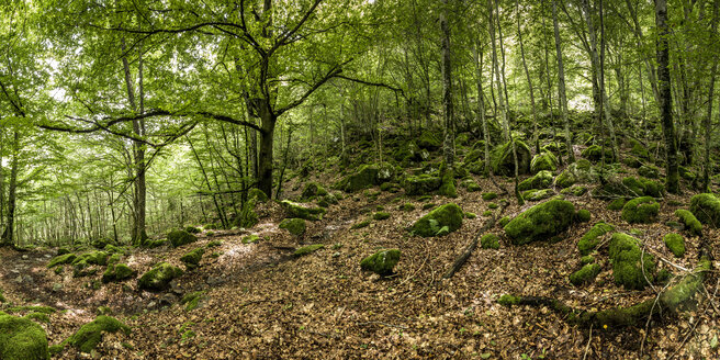 France, Pyrenees, Northern Catalonia, Valle de Orlu, forest - STSF000481
