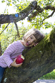 Portrait of laughing little girl sitting on an apple tree with bitten apple - LVF001786