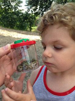 Boy exploring green frog - AFF000119